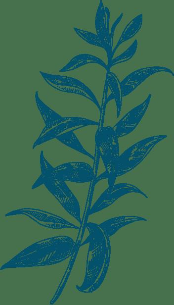 Plante Qui sommes-nous fond